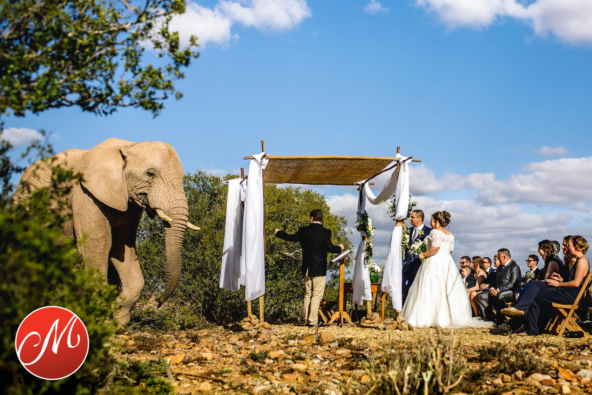 portfolio bruidsfotografie the wedding story